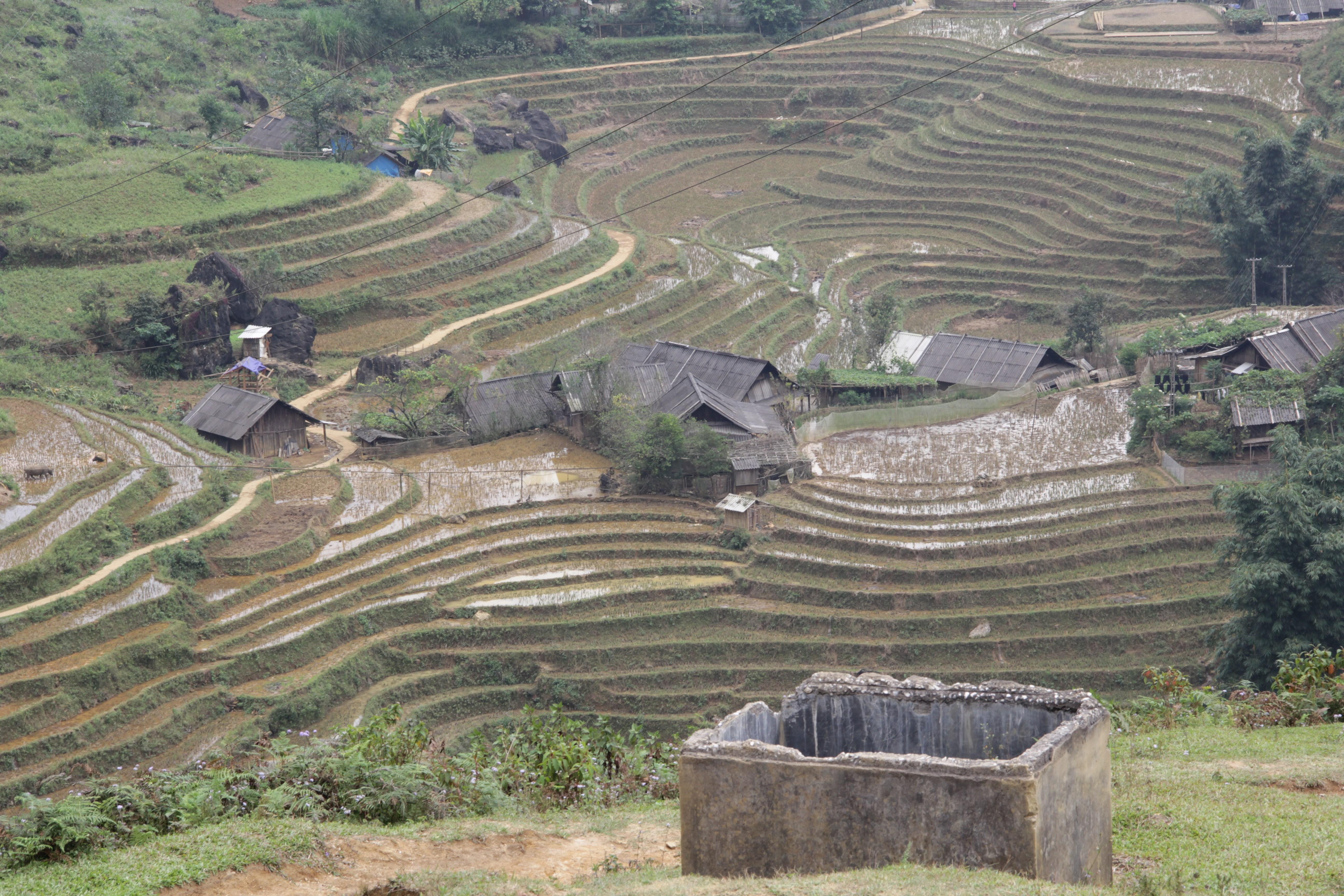 Les rizières épousent les courbes des montagnes.