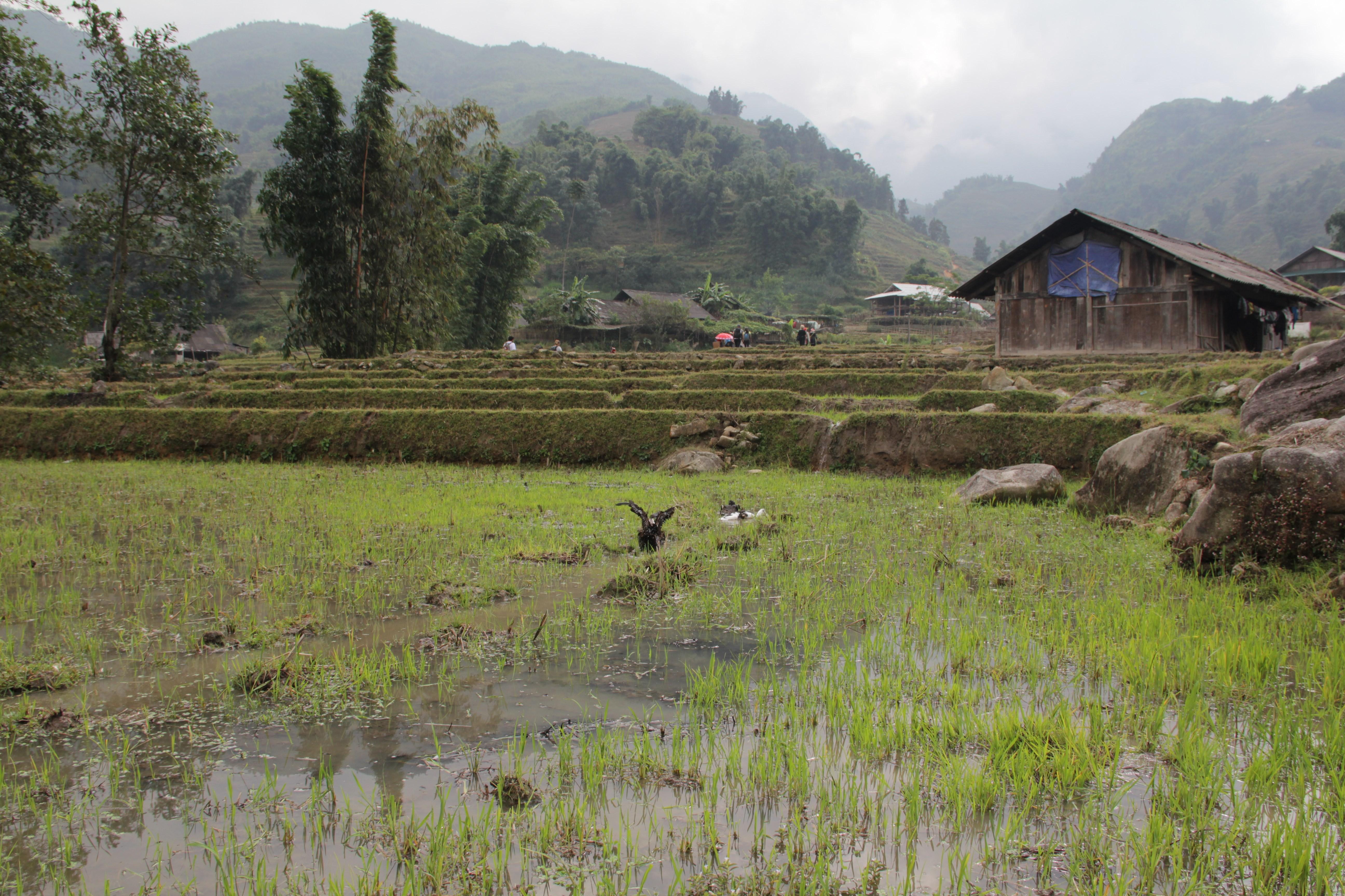 Traversée d'un village qui vit de la riziculture. (© Aurélie Bacheley)