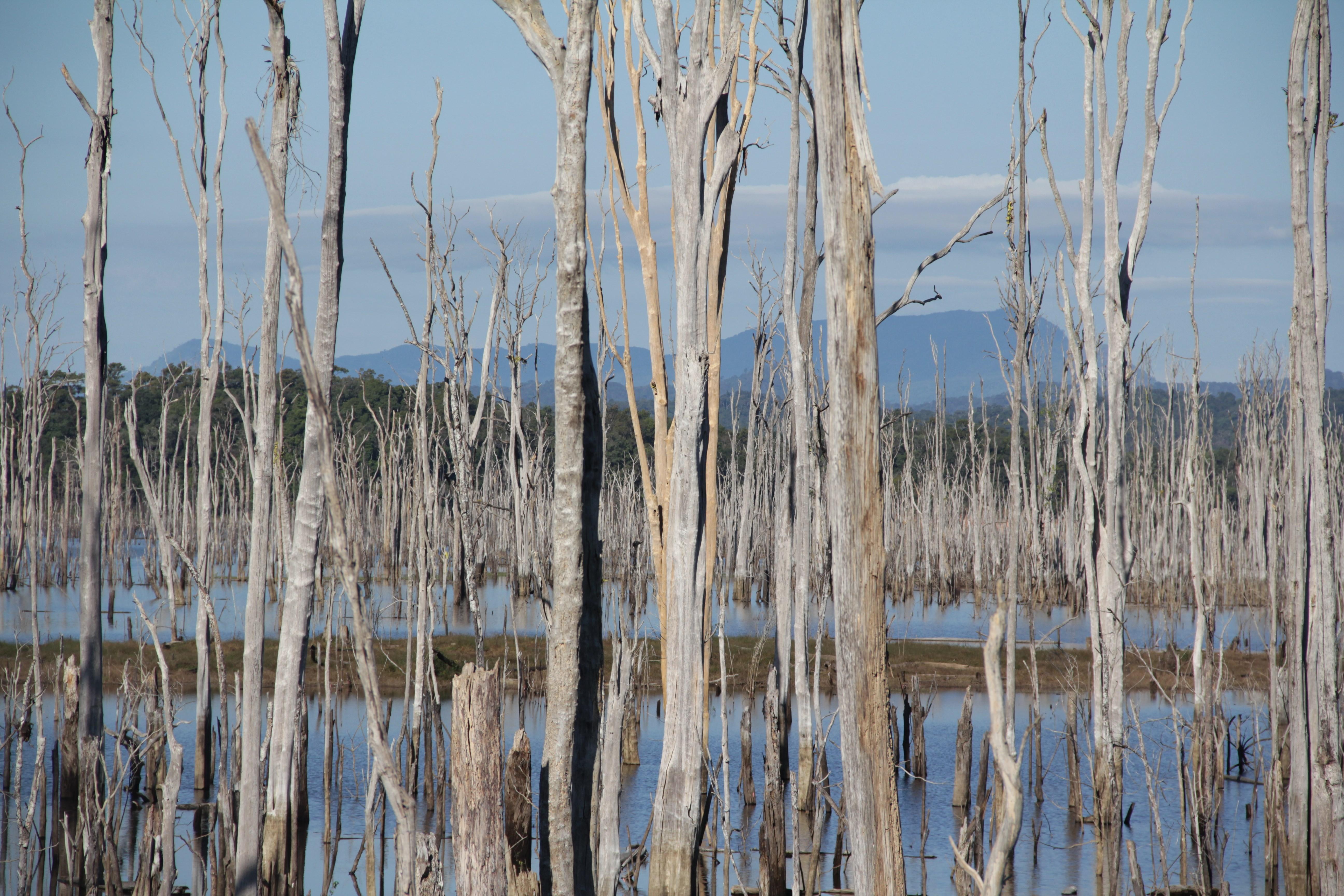Le paysage parfois chaotique est ici composé de centaine d'arbres morts dans un lac artificiel (© Aurélie Bacheley).