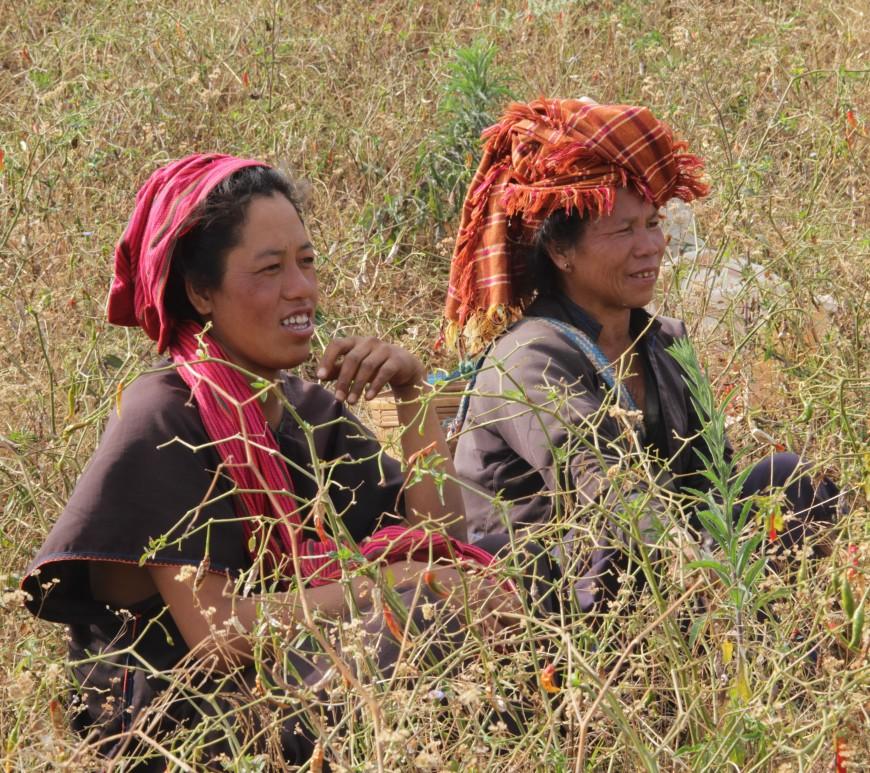 Deux femmes récoltent le chili, piment rouge qui agrémente de nombreux plats birmans (© Aurélie Bacheley).