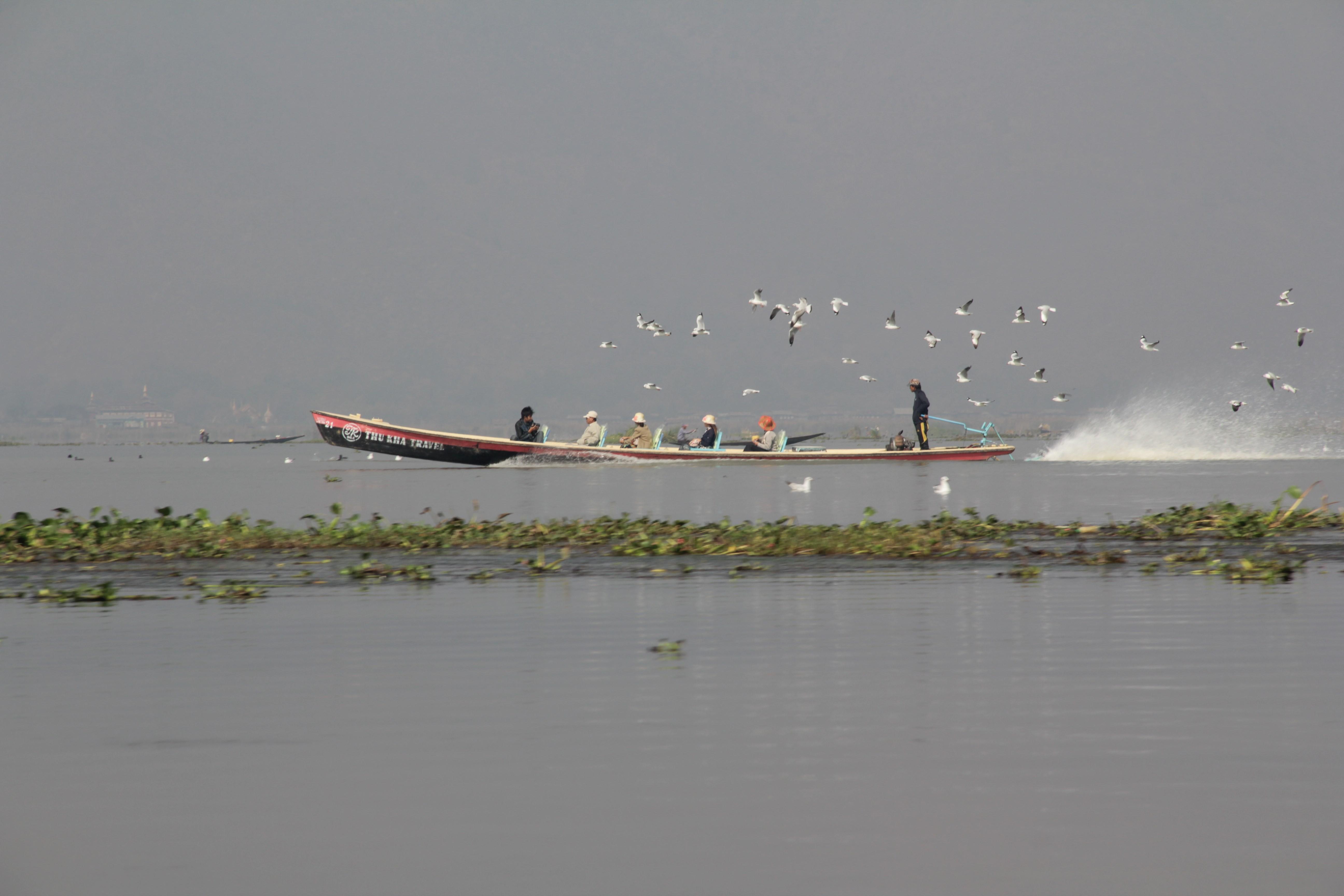 Nuée de mouettes au dessus d'une pirogue à moteur sur le lac (© Jérôme Decoster).