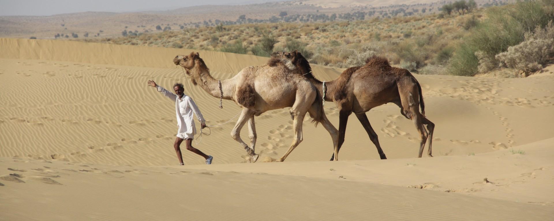 Notre guide Abey parade dans les dunes du désert du Thar avec deux de ses chameaux, Mickaël et Raju (© Jérôme Decoster).