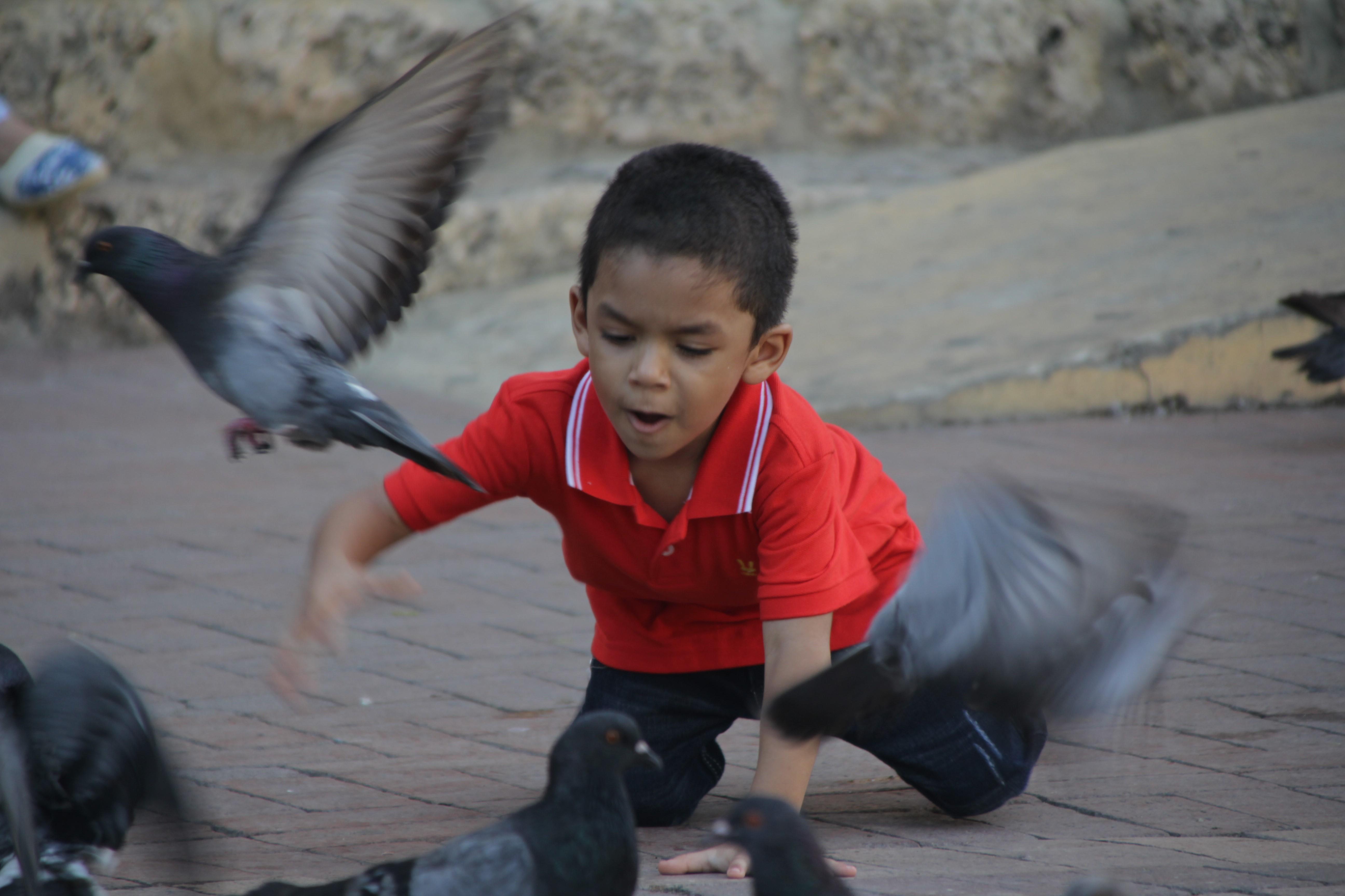 Un petit garçon nourrit les pigeons, avant de les chasser (© Jérôme Decoster).
