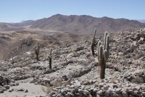 Site archéologique pré-inca de Santa Rosa de Tastil (© Aurélie Bacheley).